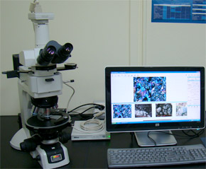편광현미경